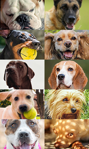 perfect pet match quiz