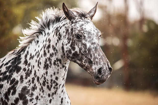What Would You Name Your Racehorse? Try Our Name Generator - NBC New